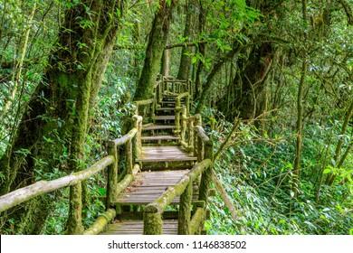 Ang Ka Luang nature trail and cloud forest at Doi inthanon, Chiang Mai, Thailand