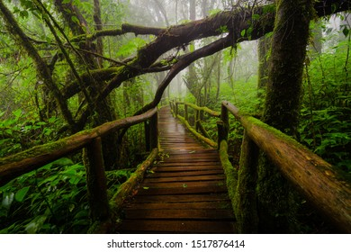 Ang Ka Nature Trail in the rainy season, Doi Inthanon National Park, Thailand