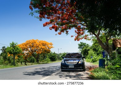 Ang Thong, Thailand - May 3, 2015 : Roadside colorful peacock tree flower on travel road in Ang Thong Province, Thailand.