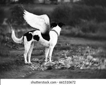 Angel dog.. - Shutterstock ID 661510672