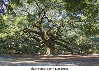 Angel Oak, Charleston SC