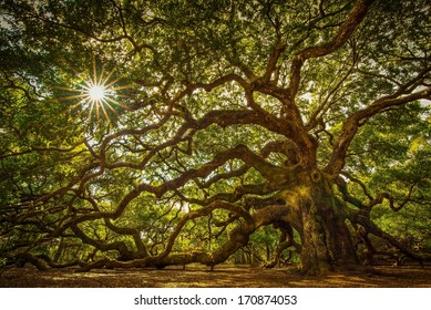 Angel Oak Tree on John's Island, South Carolina. This tree is located near Charleston and is over 1000 years old. It has withstood floods, droughts, fires, and hurricanes. Quite an impressive tree.