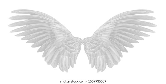 angel wings of bird on white background
