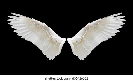 wing images stock photos vectors shutterstock