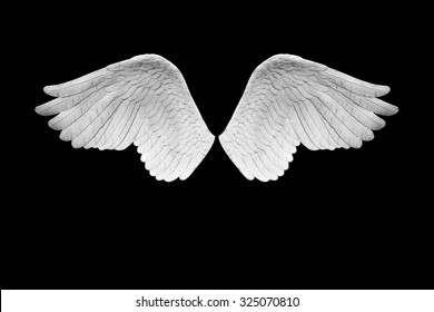 Angel wings plumage isolated on black background with clipping path