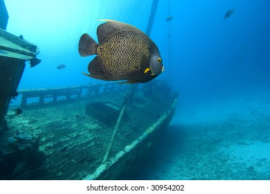 Angelfish and shipwreck, Bonaire