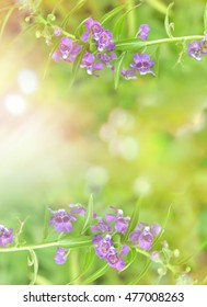 Angelonia goyazensis most beautiful bokeh Soft Focus .