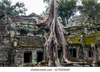 "angkor thom, cambodia - 11 28, 2018: former buddhist monastery ta prohm temple. (also known as rajavihara). parts of the movie ""tomb raider"" were shot here."