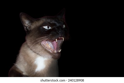 angry and aggressive cat on black background
