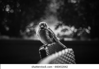 Angry Bird Color W&B - Shutterstock ID 440452042