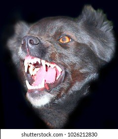 Angry black dog with big teeth on a black background.