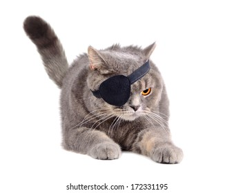 Angry British cat in caribbean pirate costume with eye patch on white background