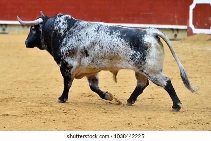 Angry Bull In Spain