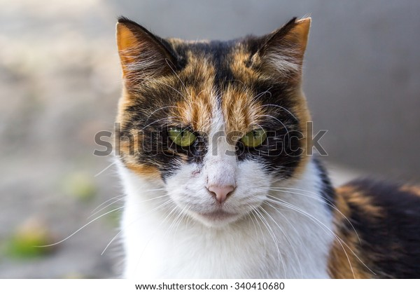 angry-cat-looking-600w-340410680.jpg