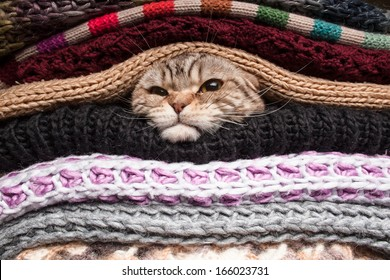 angry cat is preparing for winter, wrapped up in a pile of woolen clothes
