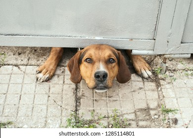 Angry dog looking out from under the gate