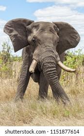 Angry elephant warning
