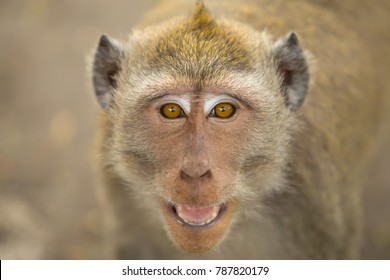 angry face monkey