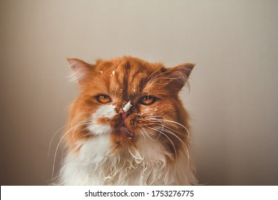 Angry ginger cat with a dirty face. Sour cream on the face of a cat. - Shutterstock ID 1753276775