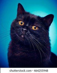 Angry Looking Black Cat On A Blue Background