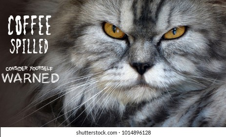 Angry looking cat with text 'COFFEE SPILLED CONSIDER YOURSELF WARNED'