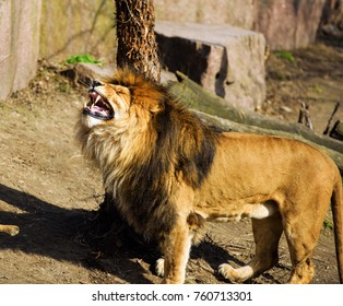 Angry Mighty Lion