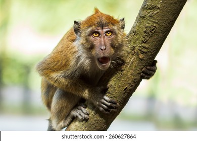 Angry Monkey Images, Stock Photos & Vectors   Shutterstock