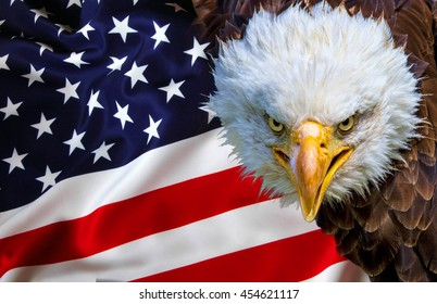 Angry north american bald eagle on american flag.