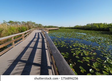 Anhinga Trail boardwalk over pond covered with water lilies in Everglades National Park, Florida.