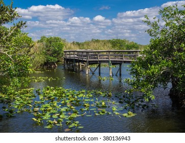 Anhinga Trail Boardwalk through the Everglades National Park, Florida