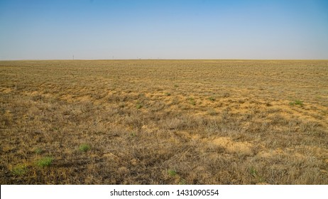 Anhydrous steppe in Kalmykia. Lonely green plants on dry, hot sand