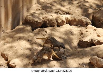 animal in Arizona Zoo, Summer