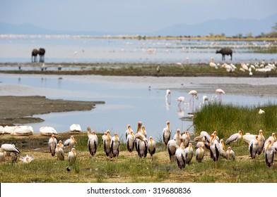 Animal around the Lake Manyara National Park in Tanzania, Africa