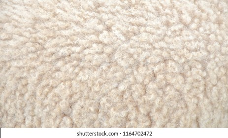 Animal background view. Close up to White Sheep's fluffy wool on background.