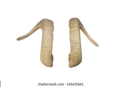 Animal Big horns