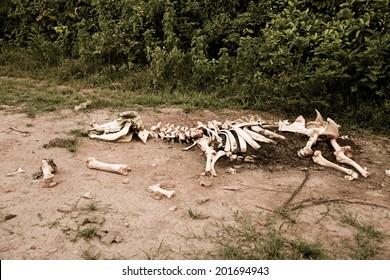 Animal bones by the road