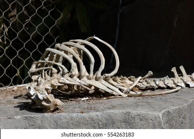 Animal bones in the wild