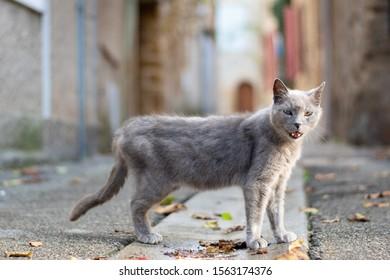 An animal cat at liberty in its natural environment, lourmarin, France