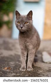 An animal cat at liberty in its natural environment, Lourmarin