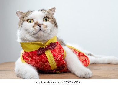 Animal or Chinese new year concept : Portrait photo of cute domestic shorthair cat in Chinese style clothing lying on wood table.