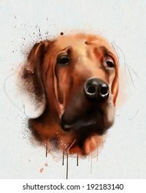 Animal collection: Dog