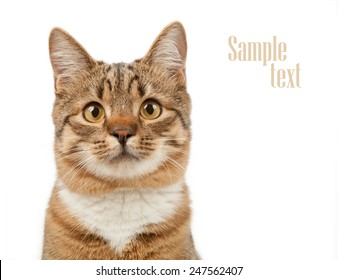 Animal concept. Cat isolated on white background.