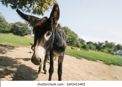 animal cute donkey on farm