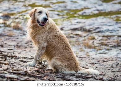 An animal dog at liberty in its natural environment, Lourmarin, France