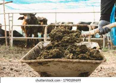Animal dung or manure at the cattle and central farms.