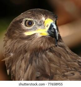 animal eagle bird head close up