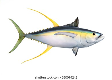 animal fish tuna fishing isolated object
