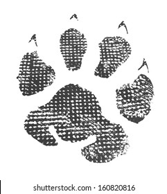Animal footprint isolated on white background