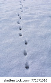 Animal Footprint in snow