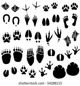 Animal Footprint Track Raster